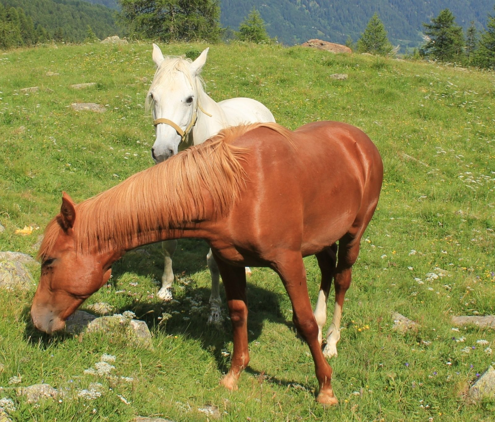 Image for Horseback riding in Trentino to discover Val di Sole