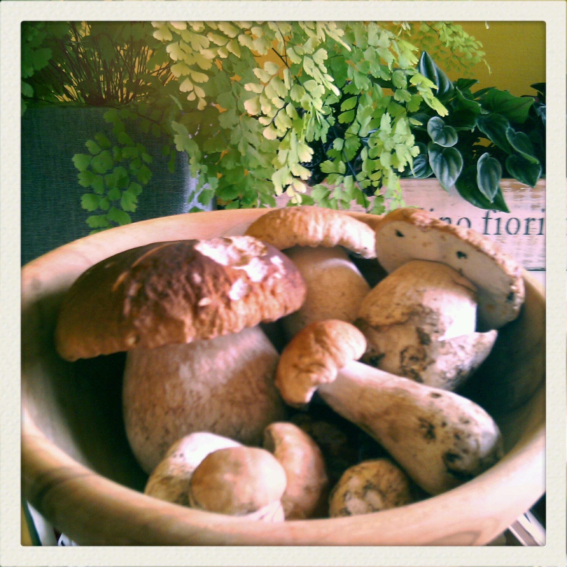 Immagine di testata per E' arrivato il tempo dei funghi in Val di Pejo! Il nostro Chef propone:
