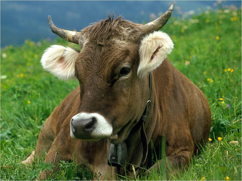 Immagine di testata per Festa dell'agricoltura in Val di Peio