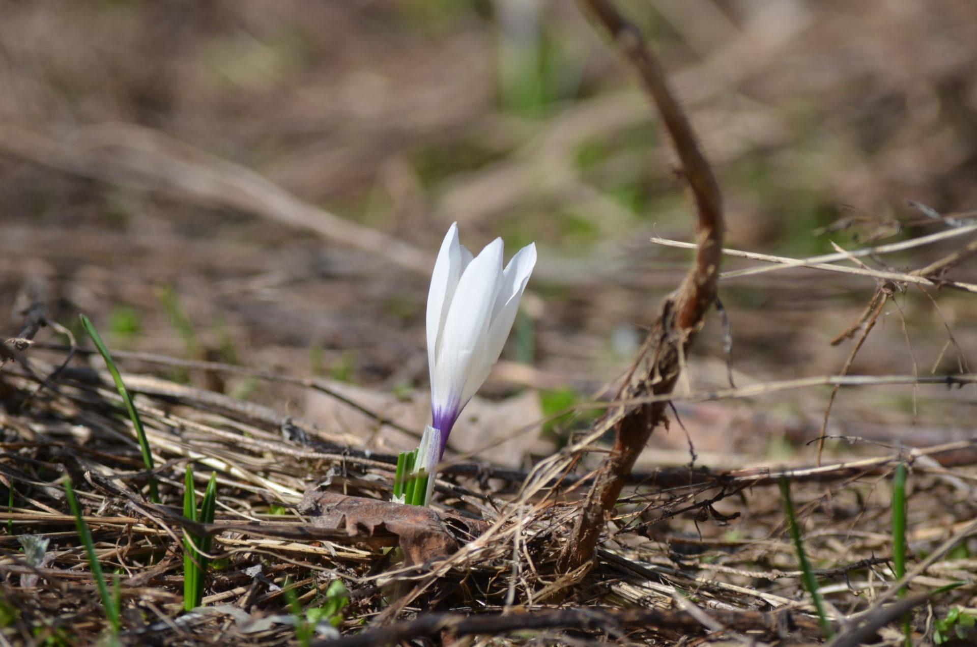 Immagine di testata per Pasqua in Val di Sole
