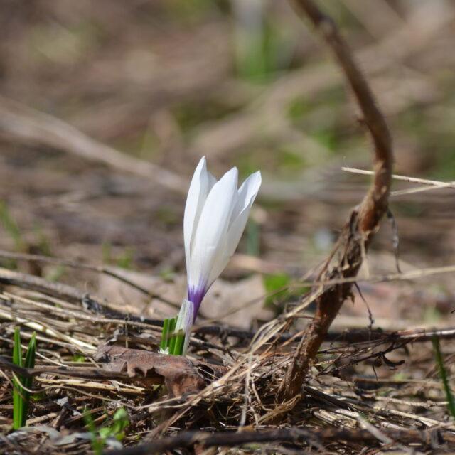 Image for Pasqua in Val di Sole
