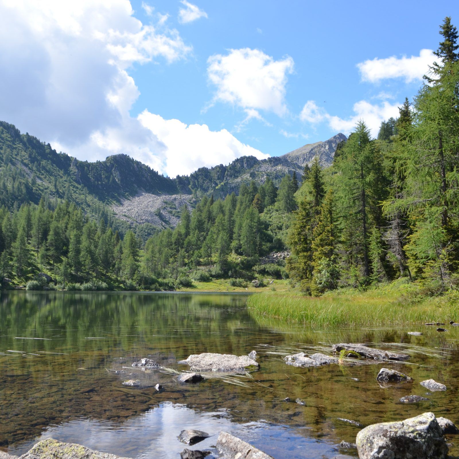 Image for High-altitude excursion in Val di Sole